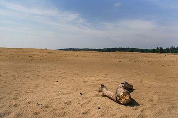 Hoge Veluwe, kale boomstam eenzaam in een uitgestrekte zandvlakte van
