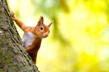 L'écureuil arrive en couinant