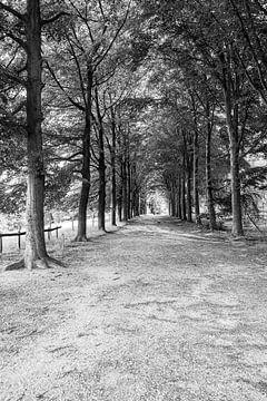 Der Weg in die Unendlichkeit von Martijn van den Hil