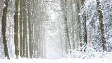 Boslandschap in sneeuw en mist