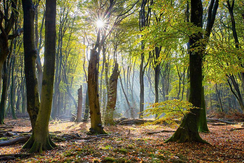 Magisch november bos van Cor de Hamer