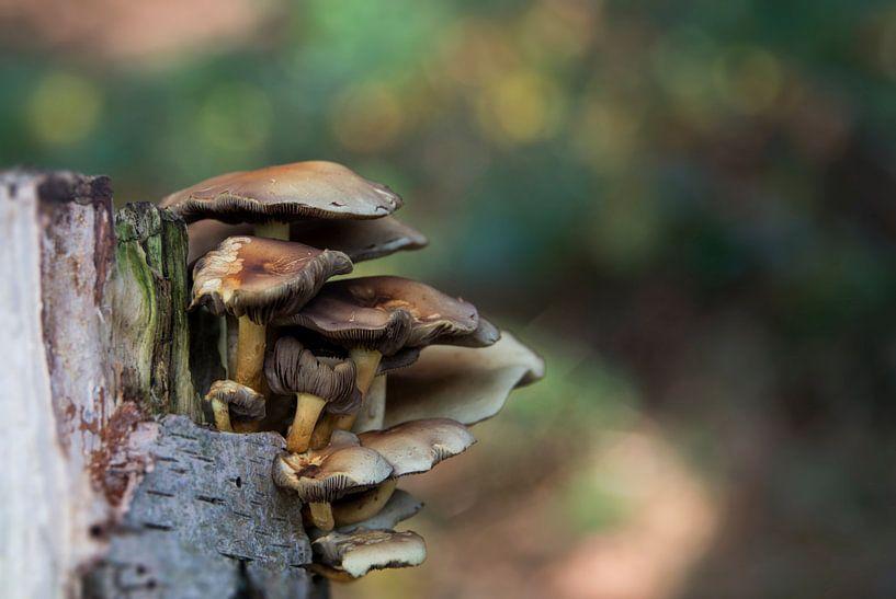 fungus  van Compuinfoto .