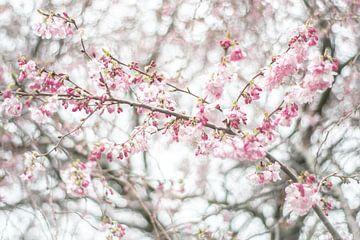 Blossem van Victoria Barberien