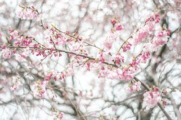 Blossem van