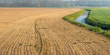 Neu ausgesätes Feld von Ruud Morijn