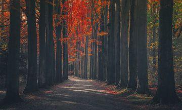 Zonien rot von Joris Pannemans - Loris Photography