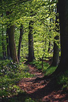 Wandelroute in het bos van Florian Kunde