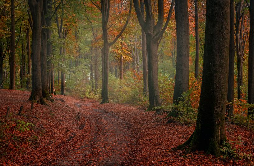 Autumn walk van Wim van D