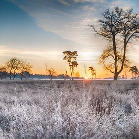 Bevroren heide van Mark Bolijn