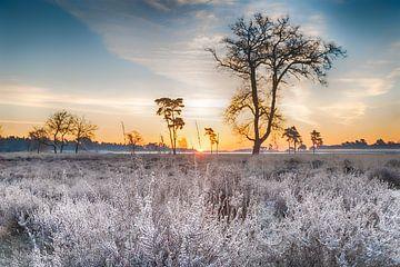 Lande gelée
