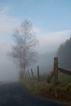 Boom in de mist van Freya Colman