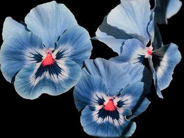 Viooltjes, blauw paars. van Ronald Smits