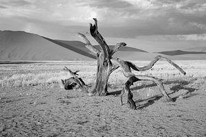 dood hout in de Namib woestijn (Sosusvlei) Namibië