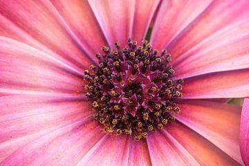 Net geen perfecte bloem, toch mooi! von Inge Heeringa