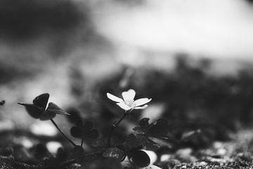 Süße kleine Blume an einem nebligen Morgen von Henry Oude Egberink