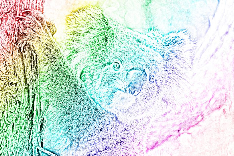 Der stolze Regenbogen-Koala von Be More Outdoor
