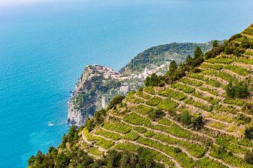 Vernazza zwischen den Weinbergen, Cinque Terre von Easycopters