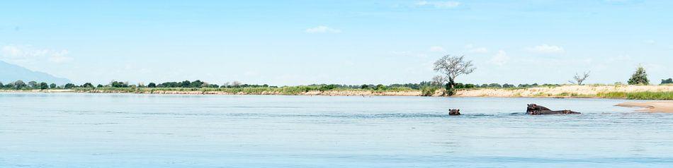 Wilde Zambezi van Steven Groothuismink
