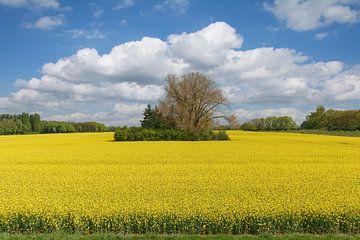 Frühling am Niederrhein von Peter Eckert
