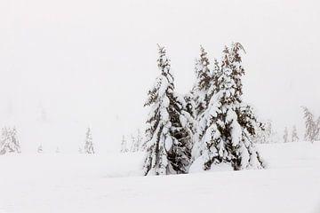 Schneebedeckte Bäume in Norwegen - 4 von Adelheid Smitt