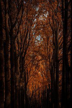 Orangenbaumwipfel von Urban Photo Lab