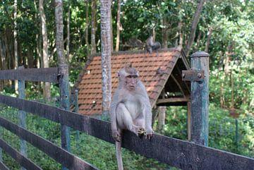 Monkey! van Ilias Achkaoukaou