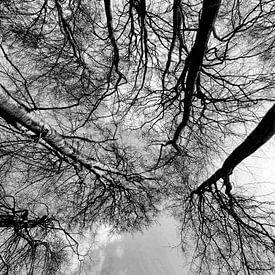 touch the sky van Dietjee FoTo