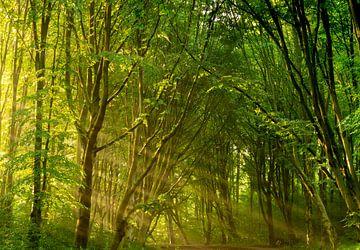 Dagdromen - Amsterdamse Bos van Koen Boelrijk Photography