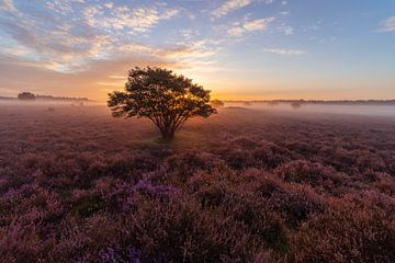 Dromerige zonsopkomst op de Hilversumse Zuiderheide van Michiel Dros