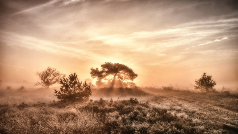 Strabrechtse Heide - Heather van Adri van Daal  Photo-Art