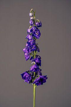 Fiore Viole (blau) von michel meppelink