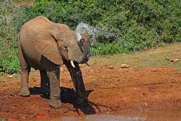 Elephant van