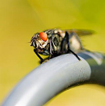 Ik zie jou!. Een macro foto van een vlief die op een hangmandje van een bloempot zit in de zon