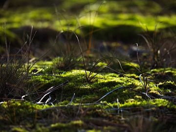 Lames d'herbe