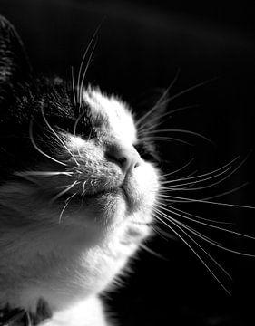 Katze genießt die Sonne von MirjamCornelissen - Fotografie