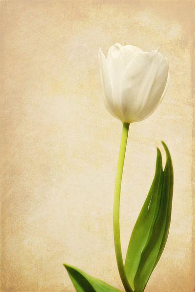 Dancing tulip van LHJB Photography