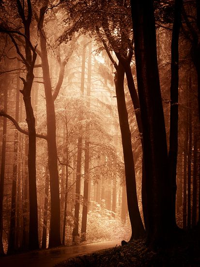Naar het licht - bruin van Mark Scheper