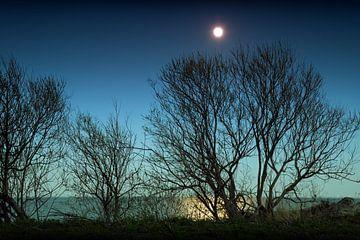 Maan boven de bomen van BVpix