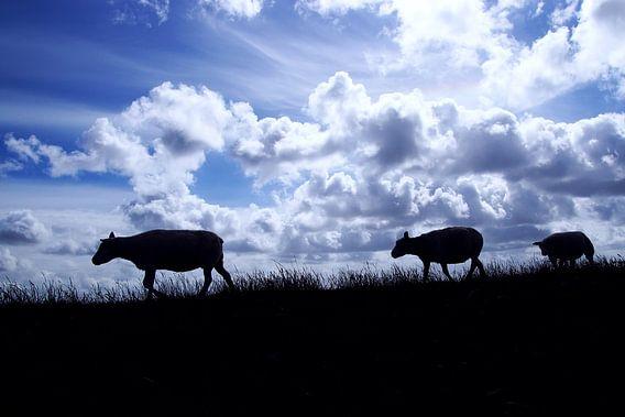schapen op een dijk