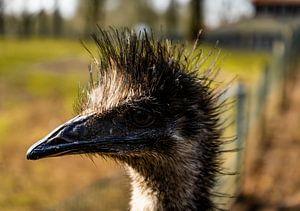 Ein schöner Emu mit schönem Licht im Hintergrund.