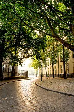 Blätterdach über der Cingelstraat in Breda von Floris Oosterveld