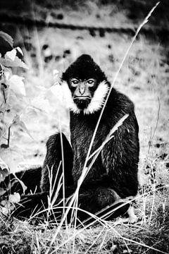 Monkey van melissa demeunier