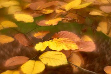 Herbstfest von Wim van Berlo