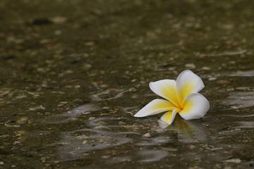 Bloem in het water sur Rianne de Heij