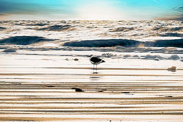 Een meeuw op het strand van Nannie van der Wal