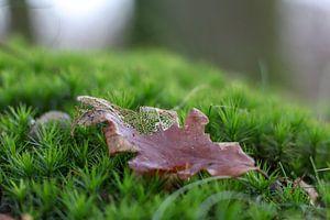 Erinnerungen an den Herbst von Lianne van Dijk