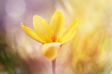 Magical Spring.... van
