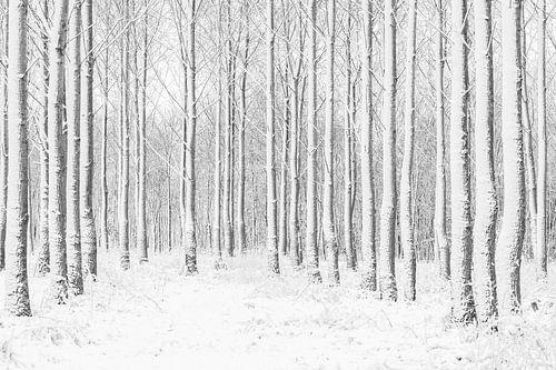 Spelen met lijnen in het bos.