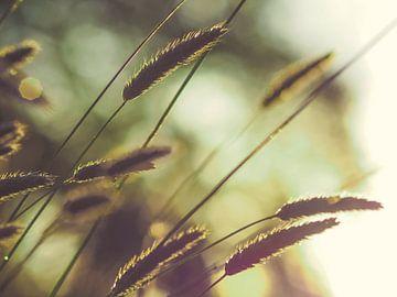 Grassen en licht 2