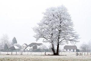 Winter wonderland van Robbie Veldwijk